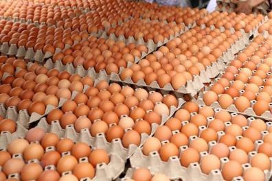 Trứng đậu